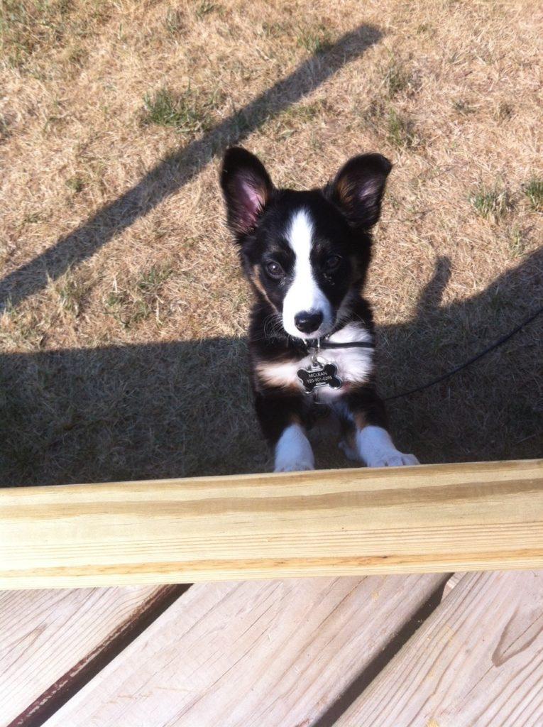 harleydog